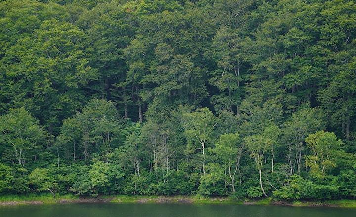 Paisagem de floresta