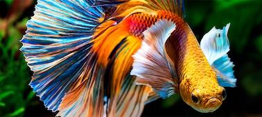 Imagem de peixe com detalhe 4K