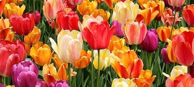 Detalhe de flores a demonstrar as subtileza das sombras e tons nas pétalas